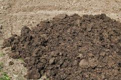 堆在农村农业领域的新鲜的肥料 免版税库存照片