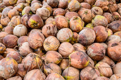 堆在地面,泰国上的老椰子 图库摄影