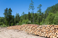 堆在森林采伐的站点的日志 免版税图库摄影