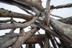 堆在海滩的干燥木头 库存图片
