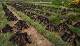 堆在爱尔兰泥炭沼的草皮干燥 库存图片