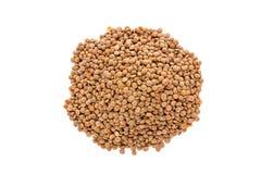 堆在白色背景的棕色扁豆 免版税库存照片