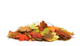 堆在白色背景隔绝的秋叶 免版税库存照片