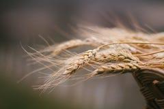 堆在草丛篮子振翼的麦子在风 库存图片
