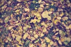 堆在草的金黄黄色秋叶,与辐形迷离 库存图片
