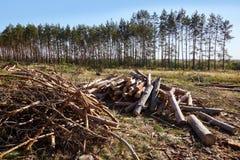 堆在锯木厂的木柴 堆木柴 库存照片