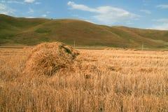 堆在领域的新近地被切开的干草 库存照片