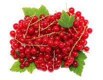 堆在绿色的成熟红醋栗莓果离开(隔绝) 库存照片