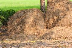 堆在ricefield的秸杆 免版税图库摄影