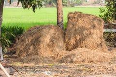 堆在ricefield的秸杆 免版税库存图片