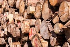 堆大树干 免版税库存图片