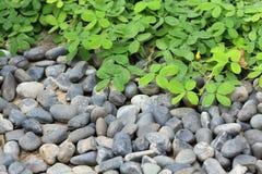 堆小卵石石头和绿色叶子 免版税库存图片