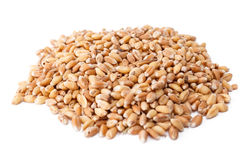 堆小麦粒 库存图片