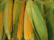 堆新鲜的成熟玉米 免版税库存照片