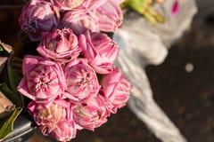 堆新鲜的桃红色莲花芽等待崇拜者在entr 库存图片
