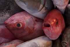 堆新鲜的海鱼在市场上,两条大红色鱼 库存图片