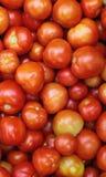堆新鲜的红色和橙色蕃茄 背景概念能源图象 免版税库存图片