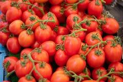堆新鲜的葡萄蕃茄 免版税库存图片