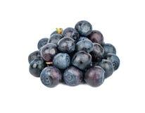 堆新鲜的蓝莓 库存照片