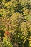 堆早期的秋天树 图库摄影