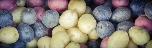 堆有机混杂的混杂的人群彩虹土豆背景 免版税图库摄影