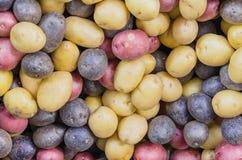 堆有机混杂的混杂的人群彩虹土豆背景 库存照片