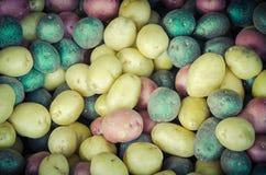 堆有机混杂的混杂的人群彩虹土豆背景 库存图片