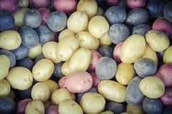 堆有机混杂的混杂的人群彩虹土豆背景 图库摄影