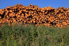 堆木和蓝天 库存图片
