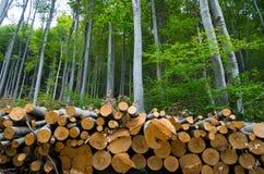 堆木头注册森林的边缘 库存照片