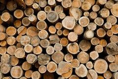 堆木日志 森林采伐的站点 击倒的树干 库存图片