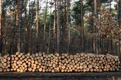 堆木材 库存照片