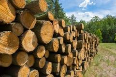 堆木注册太阳 库存图片