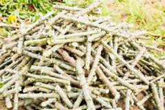 堆木薯树干剪切 免版税库存照片