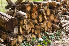 堆木柴在开放围场 免版税库存照片
