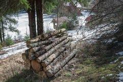 堆木柴在森林里 库存照片