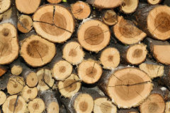 堆木柴背景纹理 免版税库存照片