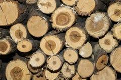 堆木柴背景纹理 免版税库存图片
