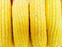 堆未加工的玉米 免版税库存照片