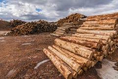 堆杉木在西班牙注册进一步处理的一个锯木厂成药丸 免版税库存照片