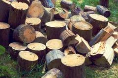 堆杉木木柴 免版税库存图片
