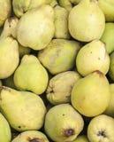 堆柑橘在超级市场 库存照片