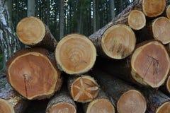 堆树干在森林(采矿业),捷克,欧洲里 免版税库存图片