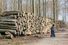 堆树干 免版税库存照片
