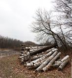 堆桦树日志 图库摄影