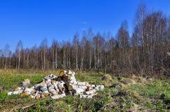 堆桦树木柴 免版税库存照片
