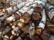 堆桦树2 免版税图库摄影