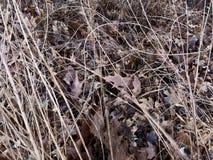 堆棕色秋天叶子 库存图片