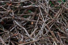 堆森林切开 免版税库存照片