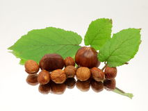 堆榛子和淡褐枝杈在镜子 免版税图库摄影